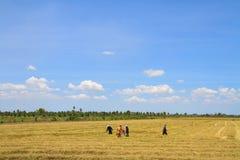 Agricoltori che lavorano nel giacimento del riso Fotografie Stock Libere da Diritti