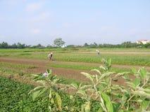 Agricoltori che lavorano nel giacimento dell'arachide Fotografie Stock
