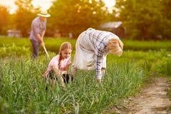 Agricoltori che lavorano nel giardino Fotografia Stock
