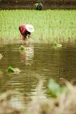 Agricoltori che lavorano nel loro campo Fotografia Stock