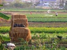 Agricoltori che lavorano nell'orto Immagine Stock Libera da Diritti