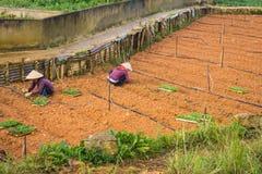Agricoltori che lavorano nella loro verdura del giardino Immagini Stock