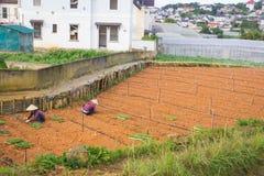 Agricoltori che lavorano nella verdura del giardino Immagine Stock Libera da Diritti