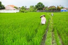 Agricoltori che lavorano nelle risaie agricoltura Immagine Stock