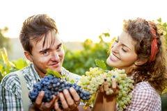 Agricoltori che mostrano l'uva Fotografie Stock