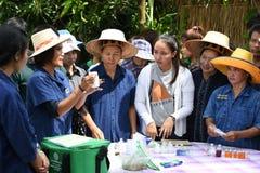 Agricoltori che piantano riso dimostrando economia sufficiente Immagini Stock