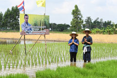 Agricoltori che piantano riso dimostrando economia sufficiente Fotografie Stock Libere da Diritti