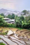 Agricoltori che piantano riso nel giacimento del riso del terrazzo Fotografia Stock