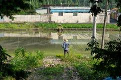 Agricoltori che piantano riso in una risaia Immagine Stock Libera da Diritti
