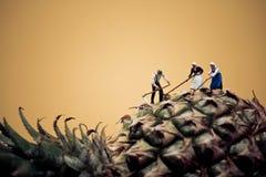 Agricoltori che raccolgono ananas Macro foto Immagine Stock