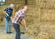 Agricoltori che raccolgono fieno con le forche Immagine Stock