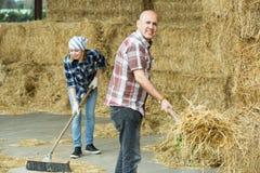 Agricoltori che raccolgono fieno con le forche Fotografia Stock