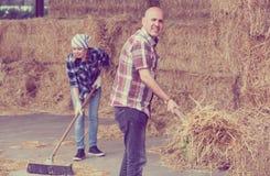 Agricoltori che raccolgono fieno con le forche Fotografia Stock Libera da Diritti