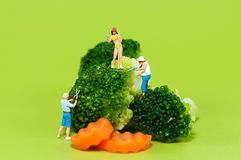 Agricoltori che raccolgono i broccoli Fotografia Stock