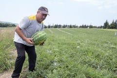 Agricoltori che raccolgono le angurie dal campo Fotografia Stock Libera da Diritti