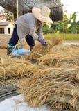 Agricoltori che raccolgono nel giacimento Tailandia del riso Immagine Stock