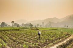 Agricoltori che spruzzano gli antiparassitari nell'azienda agricola del cereale con il bello paesaggio Immagine Stock Libera da Diritti