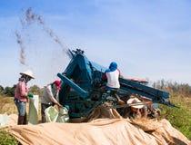 Agricoltori che trebbiano riso Fotografia Stock Libera da Diritti