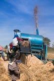 Agricoltori che trebbiano riso Fotografia Stock