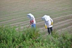 Agricoltori cinesi che portano i cappelli di Sun Immagine Stock