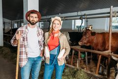 Agricoltori con latte fresco alla stalla Fotografia Stock