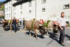 Agricoltori con un gregge delle mucche Fotografie Stock Libere da Diritti