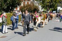 Agricoltori con un gregge delle mucche Fotografia Stock