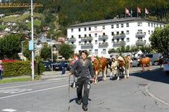 Agricoltori con un gregge delle mucche Immagini Stock