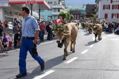 Agricoltori con un gregge delle mucche sulla transumanza annuale Fotografie Stock Libere da Diritti