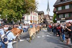 Agricoltori con un gregge delle mucche sulla transumanza annuale Fotografia Stock Libera da Diritti