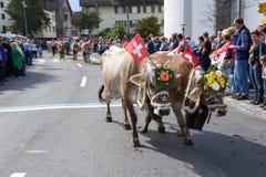 Agricoltori con un gregge delle mucche sulla transumanza annuale Fotografie Stock