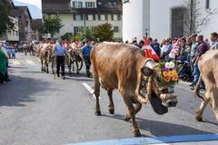 Agricoltori con un gregge delle mucche sulla transumanza annuale Immagini Stock Libere da Diritti