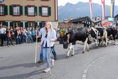 Agricoltori con un gregge delle mucche sulla transumanza annuale Immagine Stock Libera da Diritti