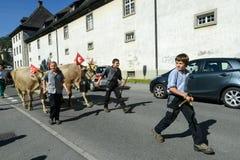 Agricoltori con un gregge delle mucche sulla transumanza annuale a Engelb Fotografia Stock