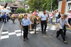 Agricoltori con un gregge delle mucche sulla transumanza annuale sulla st Immagine Stock