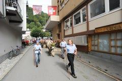 Agricoltori con un gregge delle mucche sulla transumanza annuale sulla st Immagine Stock Libera da Diritti