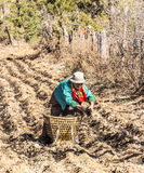 Agricoltori del Bhutanese sul campo Immagine Stock