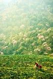 Agricoltori del cavolo su una collina Immagini Stock
