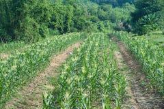 Agricoltori del cereale Fotografia Stock Libera da Diritti