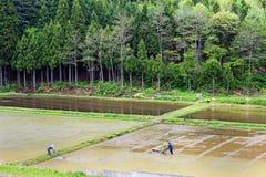 Agricoltori del riso Immagini Stock Libere da Diritti