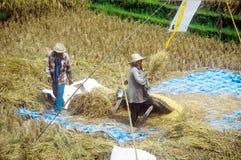 Agricoltori del riso Immagine Stock