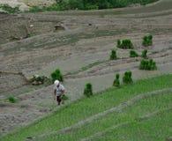 Agricoltori del riso che lavorano ai campi del terrazzo del riso Fotografia Stock