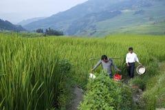 Agricoltori del riso di Yuanyang Fotografia Stock