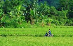 Agricoltori dell'Asia che lavorano alle risaie a terrazze Immagine Stock Libera da Diritti