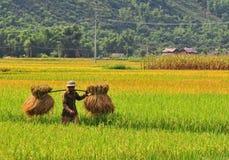 Agricoltori dell'Asia che lavorano alle risaie a terrazze Fotografia Stock Libera da Diritti