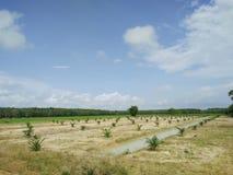 agricoltori della palma in Tailandia Immagine Stock