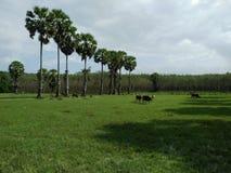 agricoltori della palma in Tailandia Immagine Stock Libera da Diritti