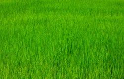 Agricoltori della Tailandia Immagine Stock