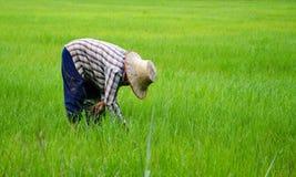 Agricoltori della Tailandia Fotografia Stock