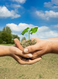 Agricoltori delle coppie che tengono pianta Fotografia Stock Libera da Diritti